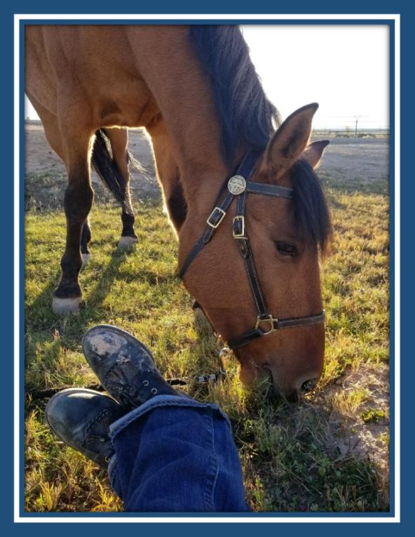"""Montezuma County Sheriff's Office Mounted Patrol Unit """"Cody"""""""
