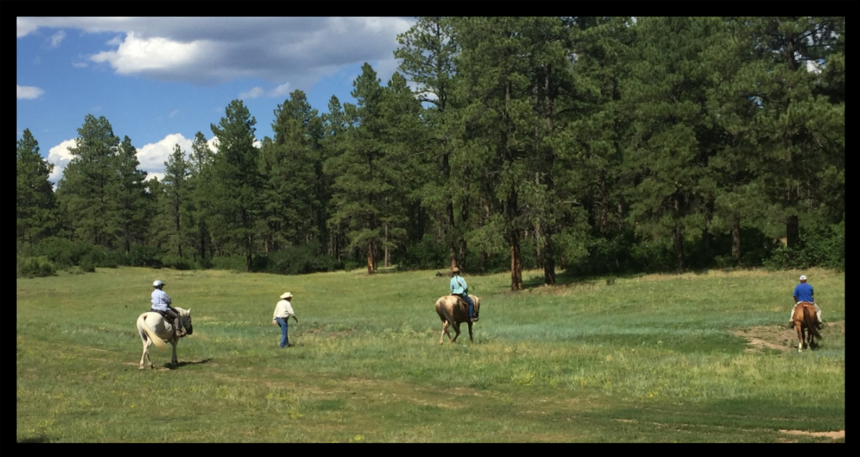 """Horses searching by """"scent"""" for people hiding in the brush"""