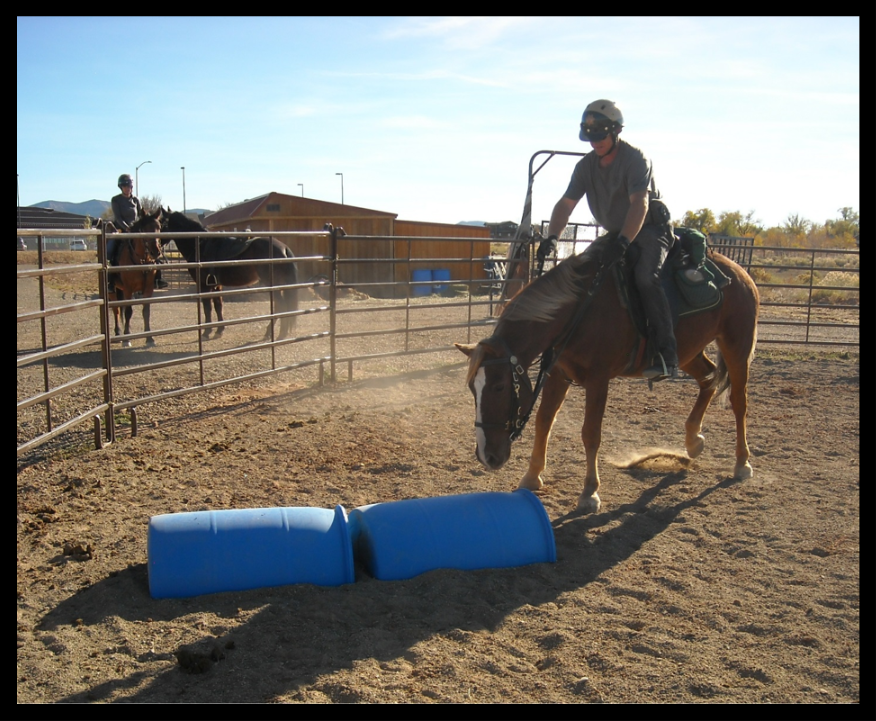 Training Rebel to jump over objects and he is a little nervous about this new lesson.